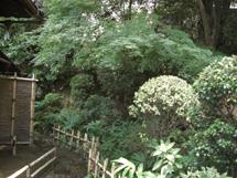 akiyama2.jpg